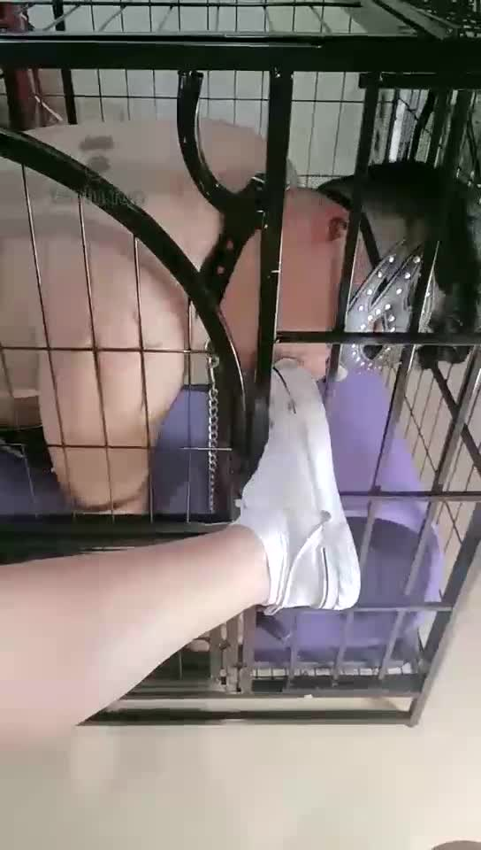 Put the student dog in a cage, lick the soles, lick cotton socks, bare feet and humiliate