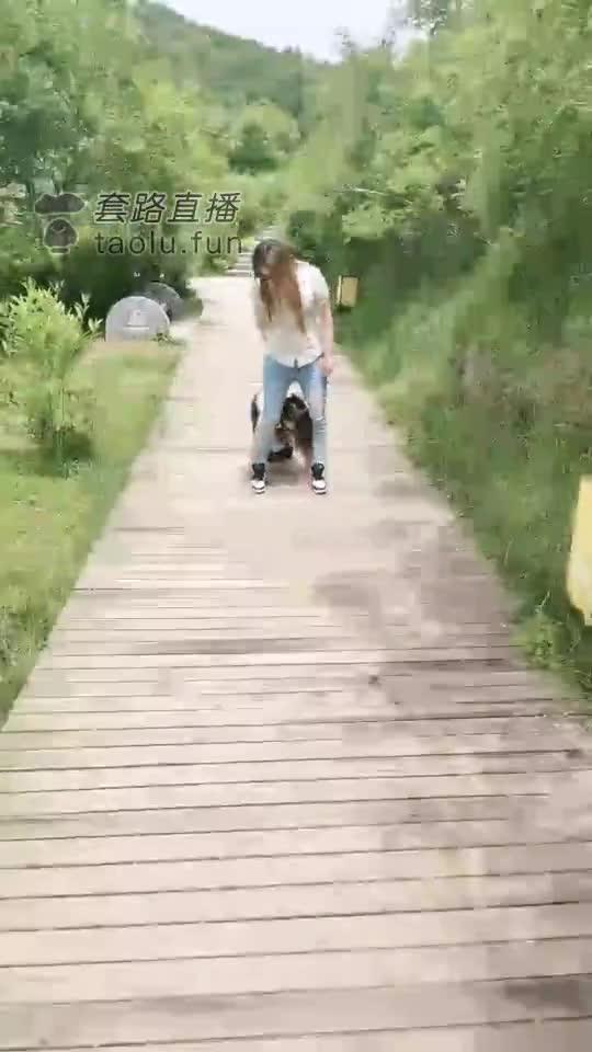 Female dog, outdoor training, development male photographer
